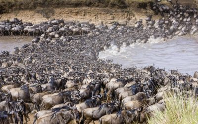 7 DAYS SERENGETI MIGRATION PHOTOGRAPHIC SAFARI