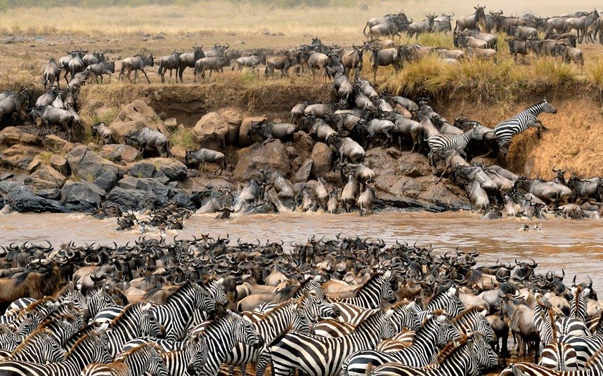 7 DAYS SERENGETI WILDEBEEST MIGRATION SAFARI